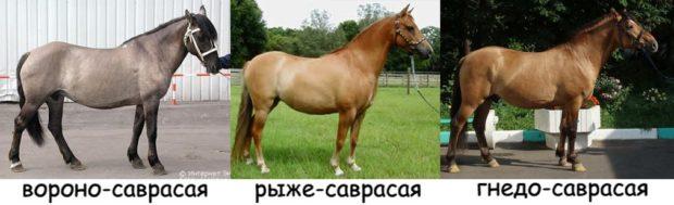 Оттенки саврасовой масти коней