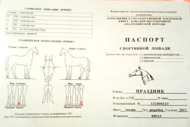 Паспорт коня в России - образец