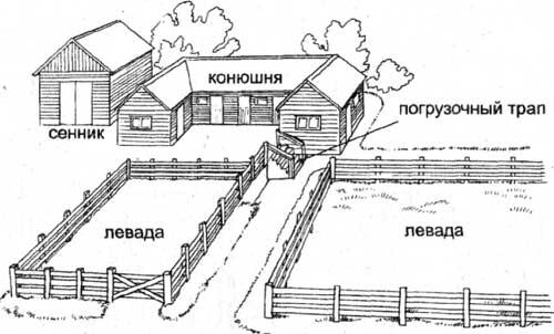 Устройство конюшни - чертеж
