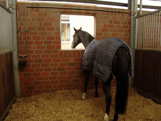 Утепление лошади зимой