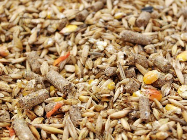 Зерновая смесь с комбикормом