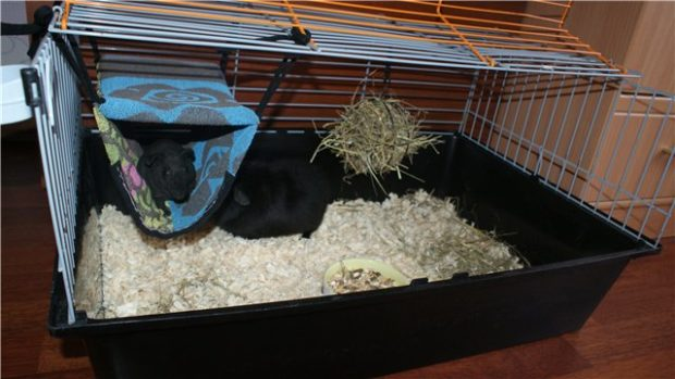 Домик для морской свинки из полотенца