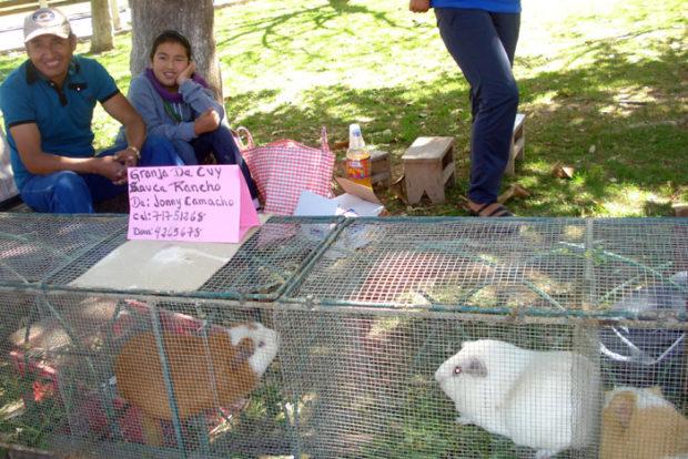 Продажа куи в Перу на рынке