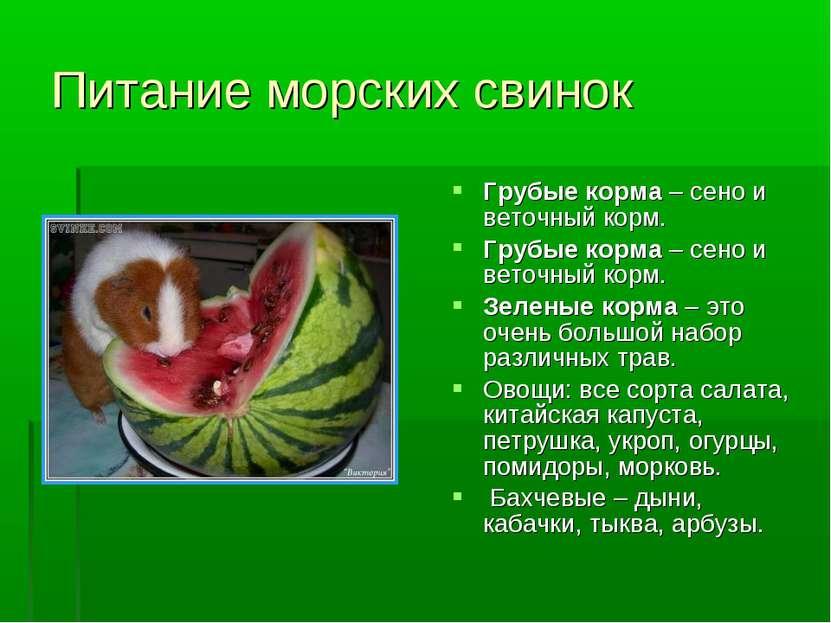 фотосалоны можно ли давать арбуз морским свинкам допустимое