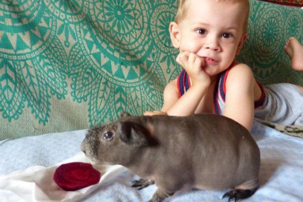Свинка скинни и аллергия