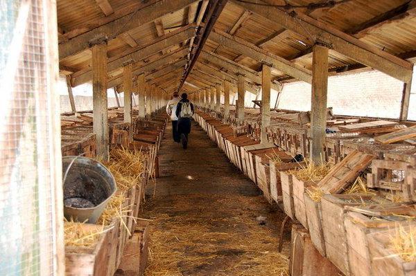 Ферма по разведению нутрий на тысячи голов