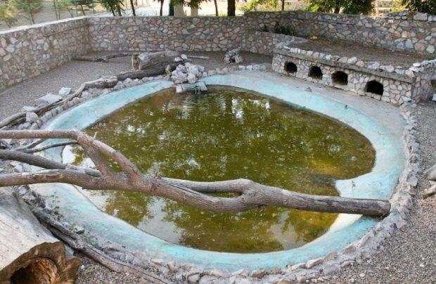 Ферма с самодельным бассейном