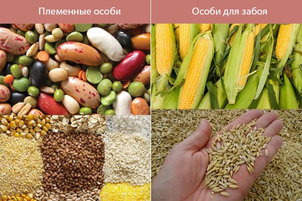 Чем кормить нутрий