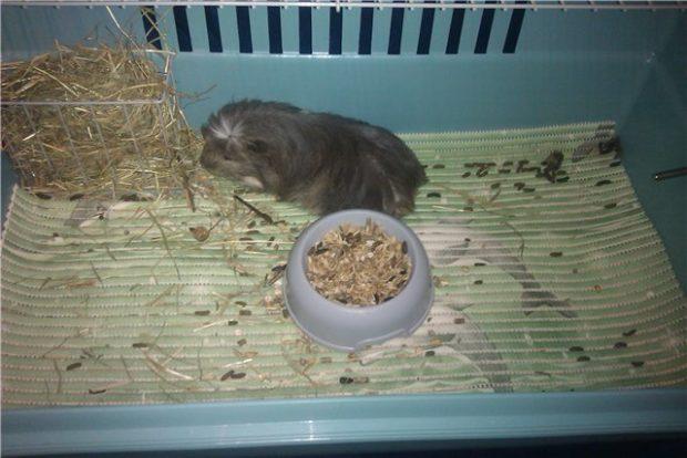 Коврик в клетке с морской свинкой