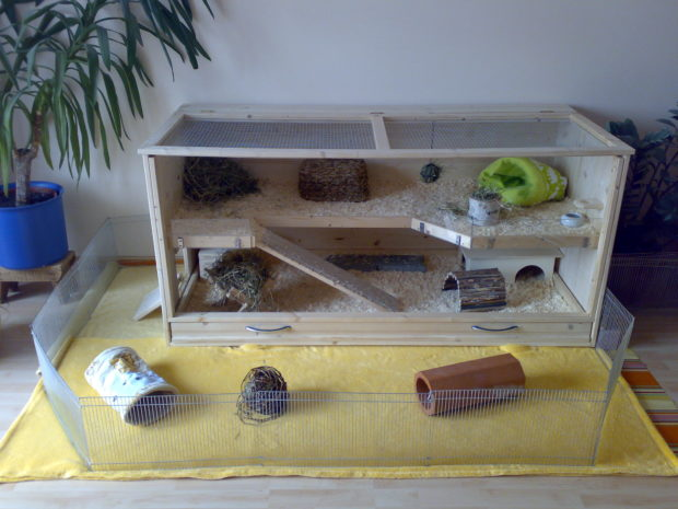 Дома морской свинке своими руками