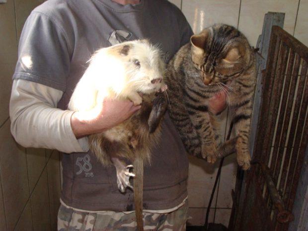 Нутрии - добродушные и компанейские животные