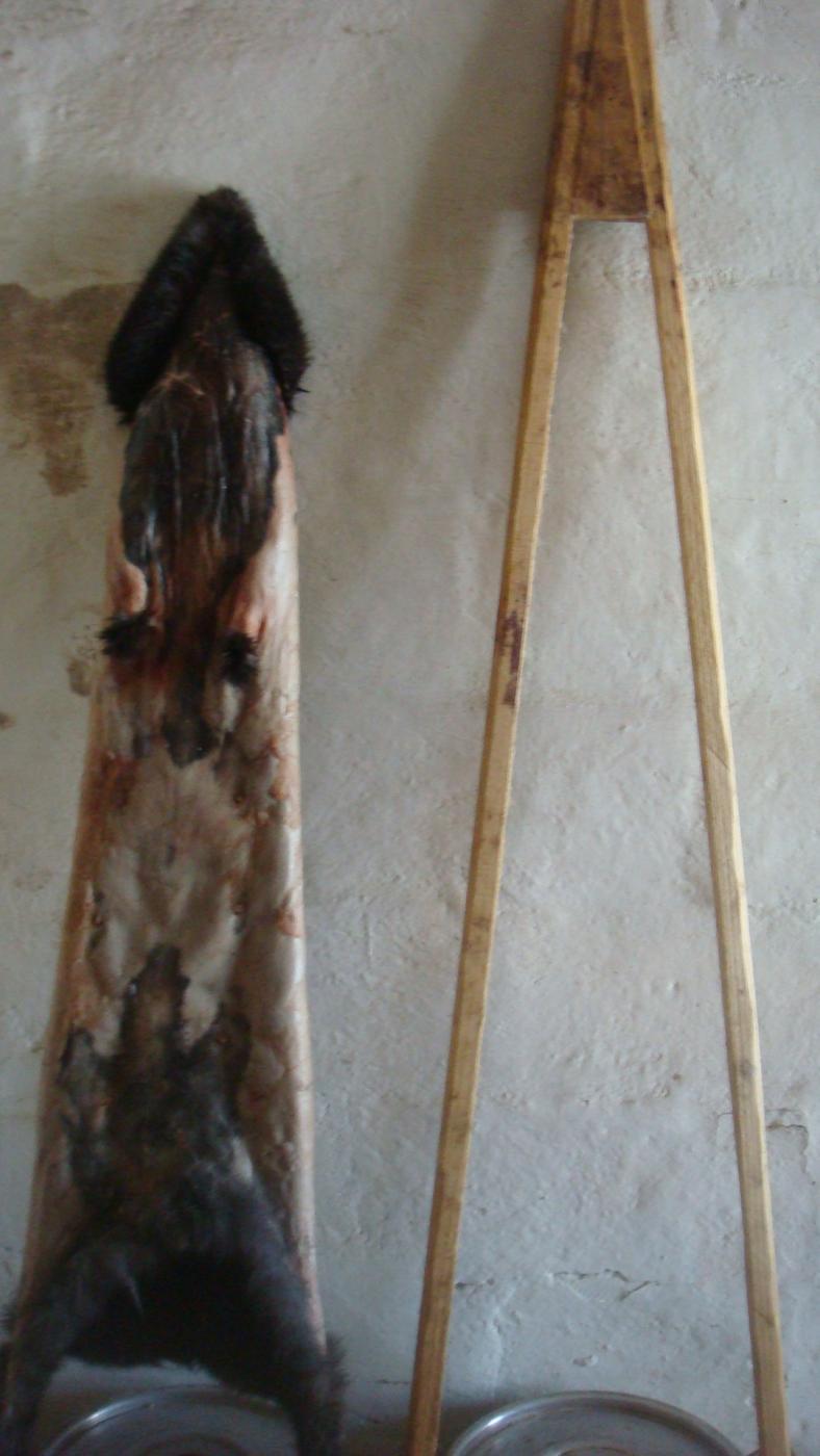 Выделка шкурок кролика в домашних условиях 52