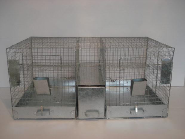 Клеточная секция на 3-4 зверька