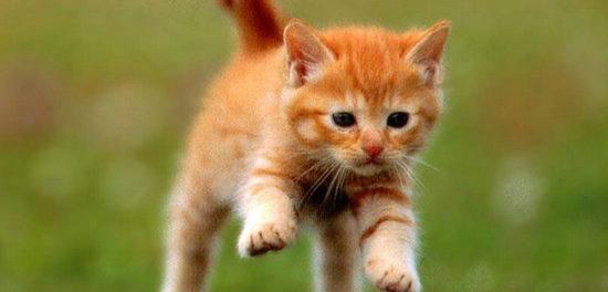 Кот бежит по траве