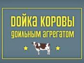 Дойка коровы агрегатом