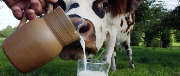 Количество молока от коровы