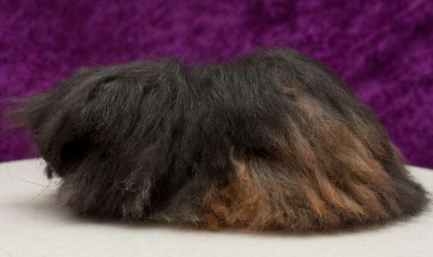 Порода альпака, цвет агути