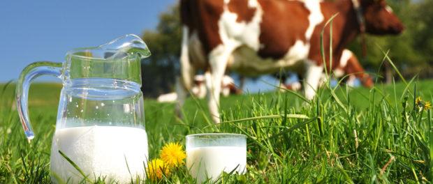 Увеличение удоев молока