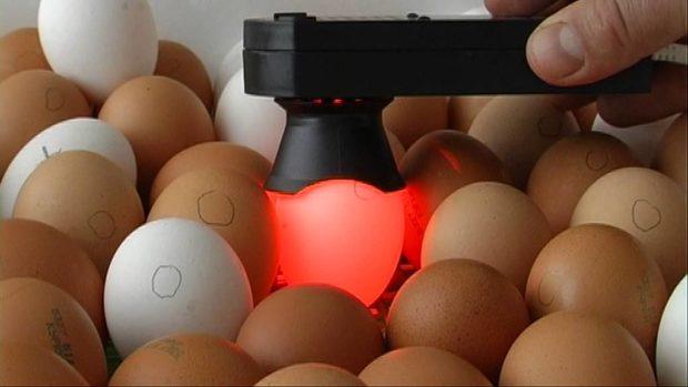 Молоточковый на 1 яйцо