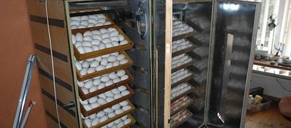 Рамочный лоток в инкубаторе