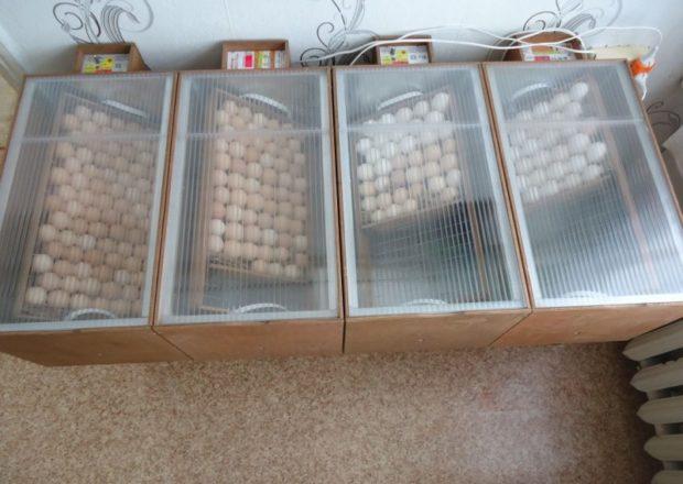 Поворот яиц в инкубаторах