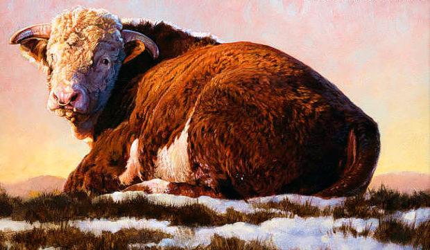 Густая шерсть быка