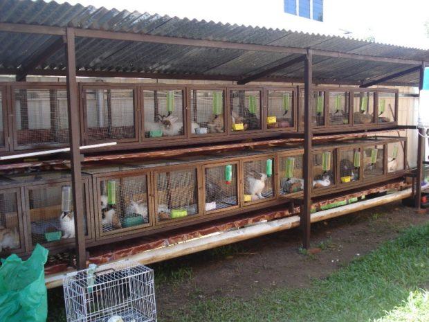 Ферма на улице