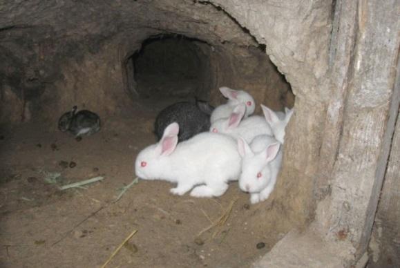 Кролики в норах