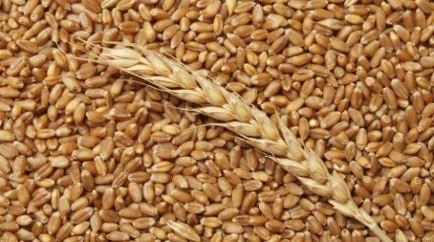 Обеззараживание зерна - профилактика
