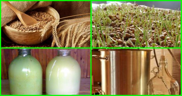 Самогона из пророщенной пшеницы в домашних условиях 474