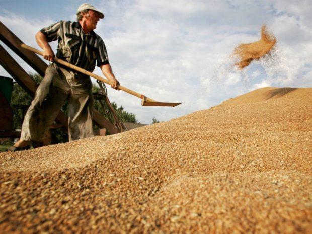 Зрелое зерно