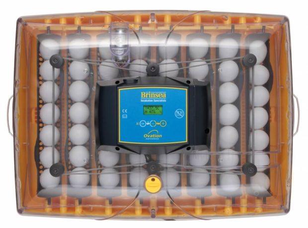 Инкубатор Ovation 56 Advance EX AUTO