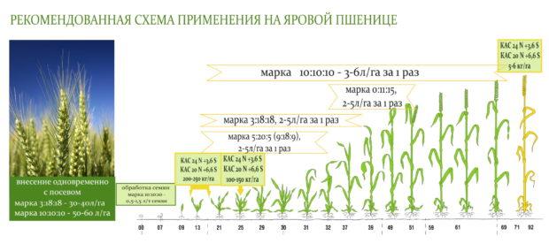 Фазы роста и удобрения
