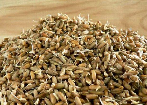 Пропащивание зерна