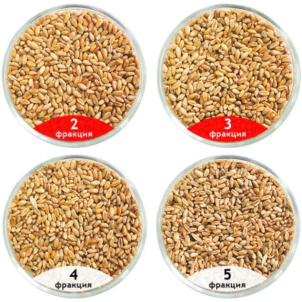Фракции пшеницы