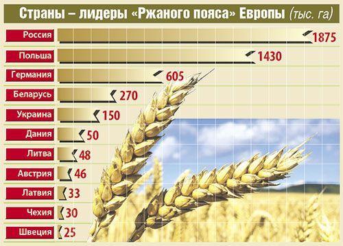 География выращивания ржи