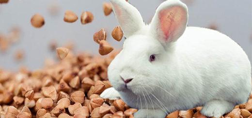 Гречка для кроликов